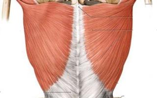 症例紹介 <背中・腰の痛み>